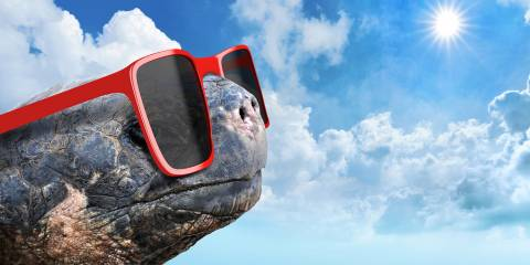 an old tortoise wearing hip sunglasses