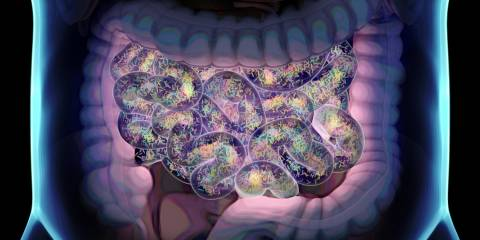 an illustration of the intestines and their healthy bacteria