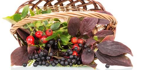A basket of rosehips and elderberries