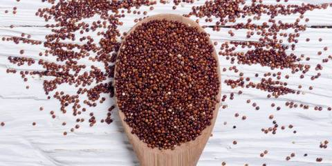 Red quinoa on a wooden spoon.