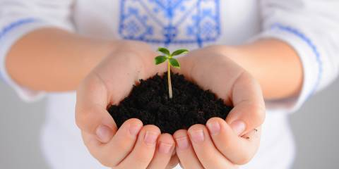 A little girl holding soil with a plant sprouting