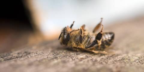 A dead honey bee.