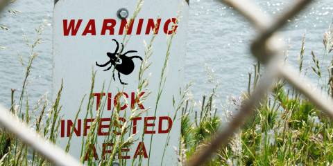A sign beyond a fence next to a body of water warning of a tick infested area.