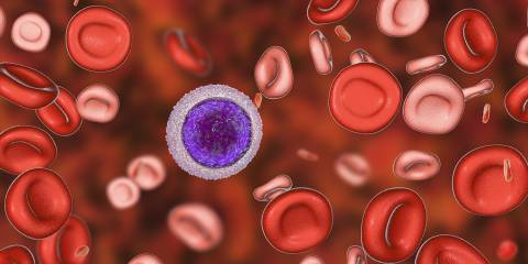 An illustration of red blood cells