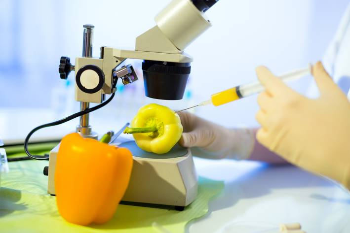 Genetically-modified bell peppers under a microscope, getting stuck with a syringe