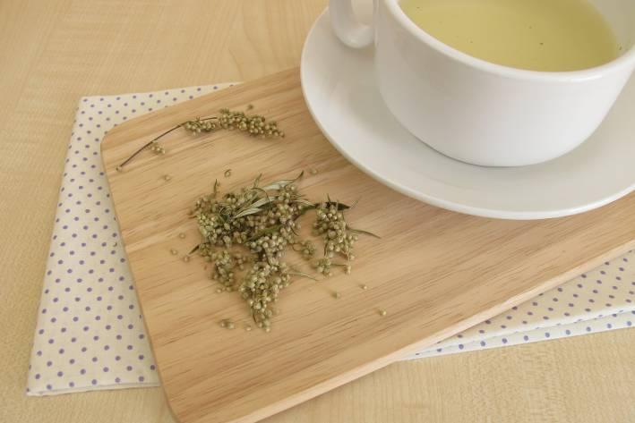 mugwort and a freshly brewed cup of herbal tea