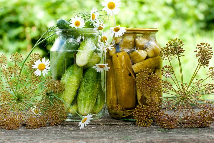 DIY pickle canning at home