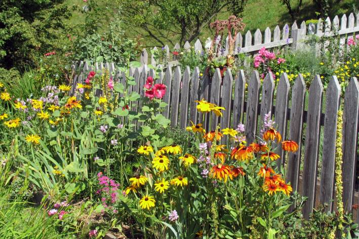 Organic gardening with annual flowers around wooden border.