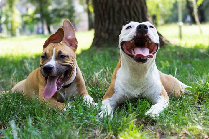 two happy dogs in the park.