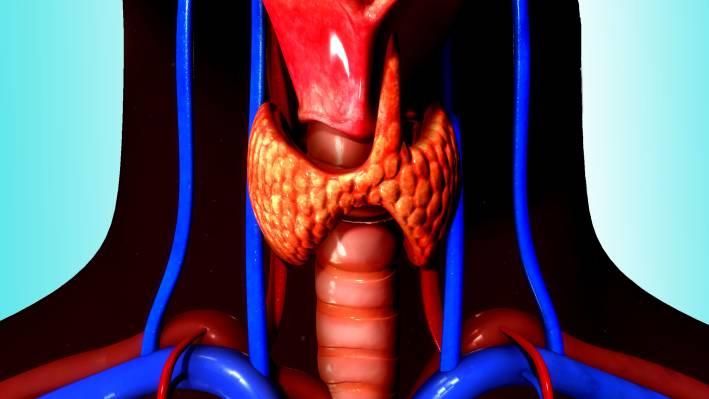 Thyroid, Underactive