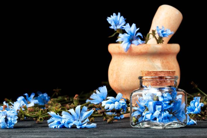 Fresh chicory flowers in a wooden mortar & pestle.