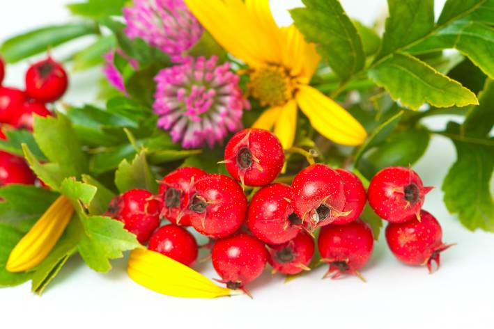 Hawthorne berries and leaves