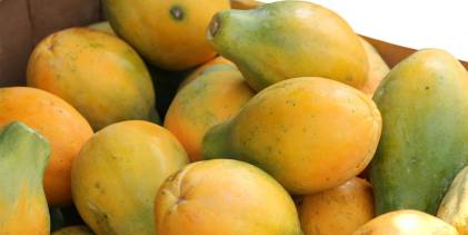 bunch of papaya fruit