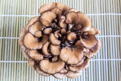 A cluster of maitake mushrooms on a bamboo mat
