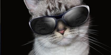 Kitten with Sunglasses