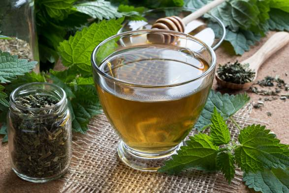 Fresh and dried nettles with a cup of nettle tea.