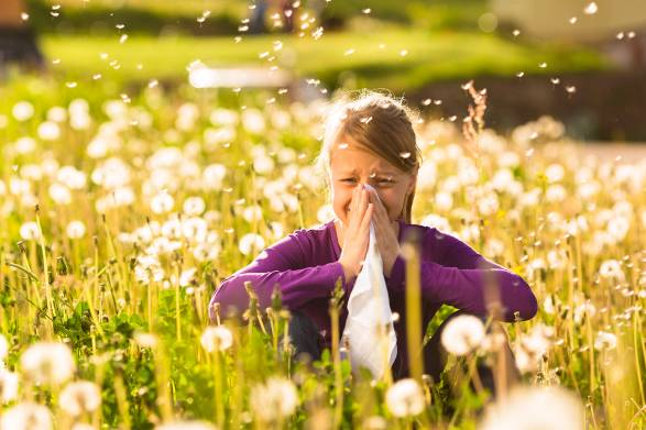 A little girl in a field, sneezing her poor head off.
