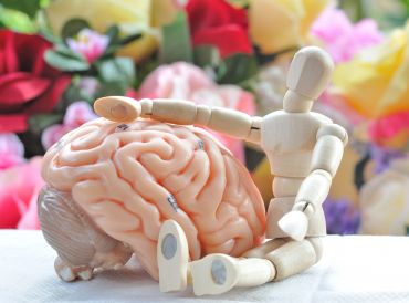 Wooden human model next to a model of the human brain.