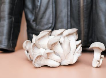 A troop of  white mushrooms with a mycelium leather jacket in the background.
